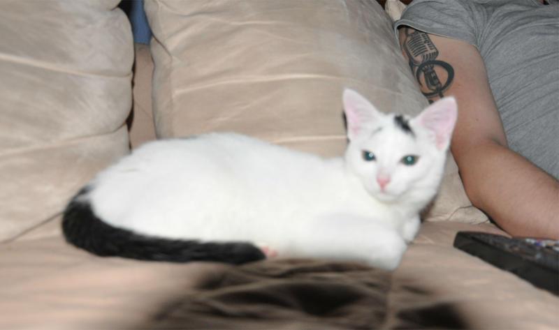 Katzenkinder suchen Zuhause 16543814vo