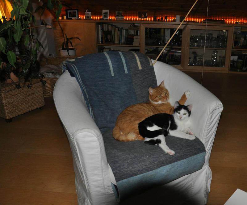 Katzenkinder suchen Zuhause 16543816az