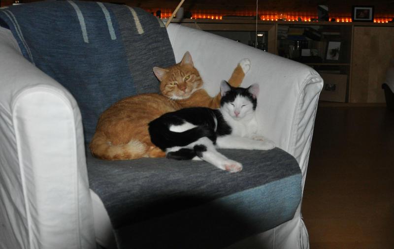Katzenkinder suchen Zuhause 16543817ut