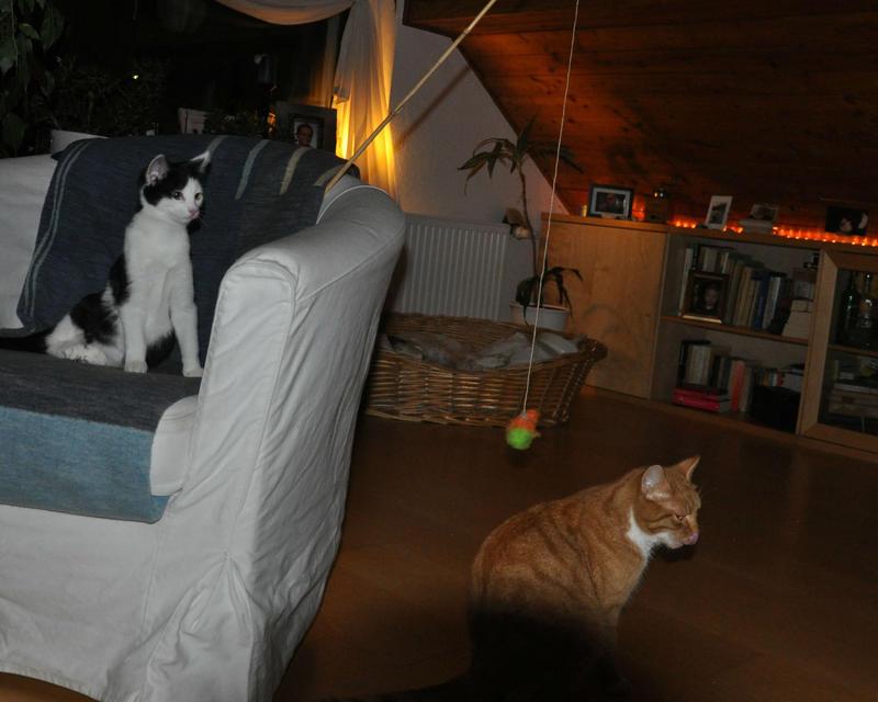 Katzenkinder suchen Zuhause 16543818xz