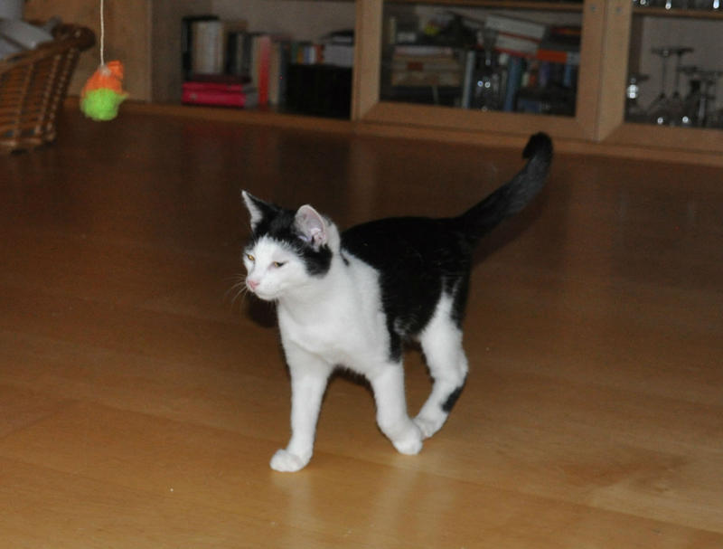 Katzenkinder suchen Zuhause 16543822zm