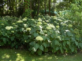 Schattenpflanzen schatteng rten gestalten - Schattenpflanzen garten ...