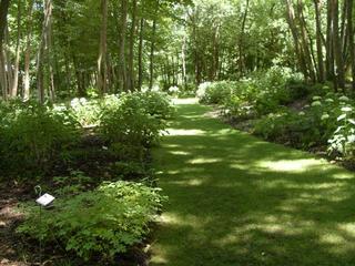 Schattenpflanzen schatteng rten gestalten - Schattengarten gestalten ...