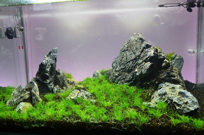 Pflanzen Auf Steinen Fixieren Wasserpflanzen Allgemein