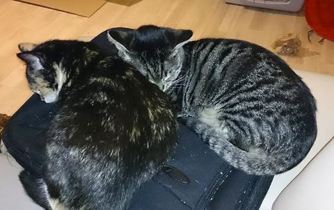 she ra und lissy 2 au ergew hnliche katzen auf dem weg ins richtige leben seite 14 katzen. Black Bedroom Furniture Sets. Home Design Ideas