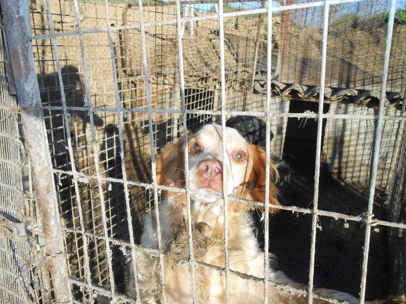 Dringender Spendenaufruf für 30 verwahrloste Hunde aus Sahagun/Spanien 16743448ik