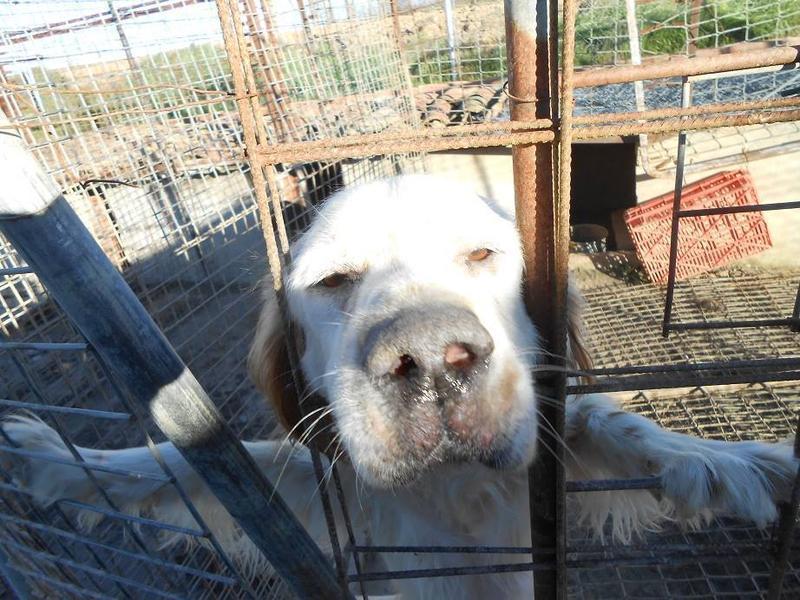 Dringender Spendenaufruf für 30 verwahrloste Hunde aus Sahagun/Spanien 16743450af
