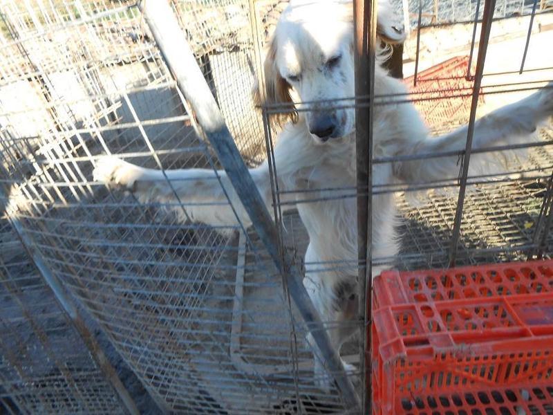 Dringender Spendenaufruf für 30 verwahrloste Hunde aus Sahagun/Spanien 16743452mm