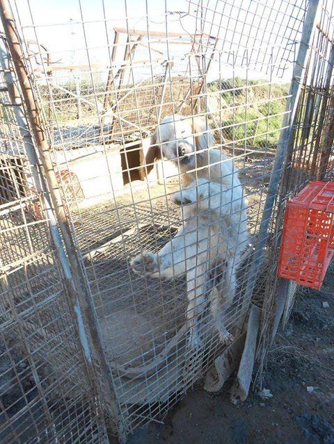 Dringender Spendenaufruf für 30 verwahrloste Hunde aus Sahagun/Spanien 16743474py
