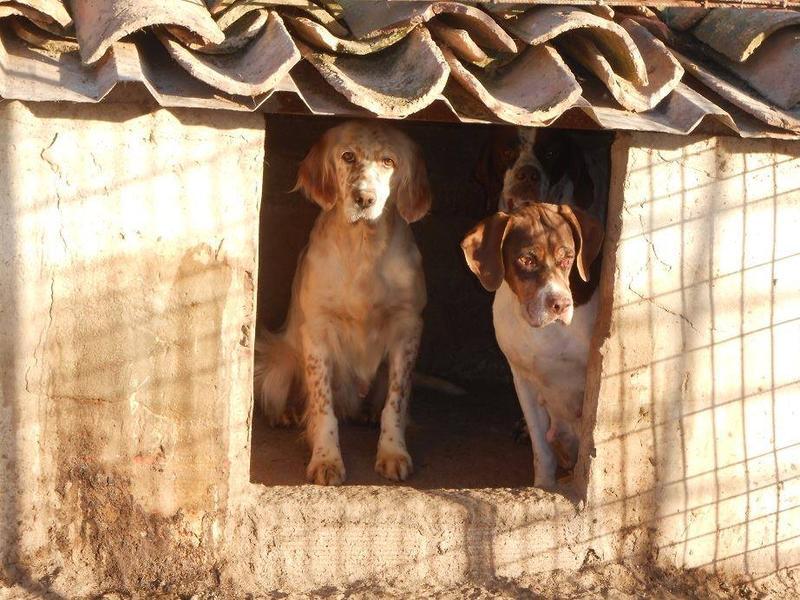 Dringender Spendenaufruf für 30 verwahrloste Hunde aus Sahagun/Spanien 16743483te