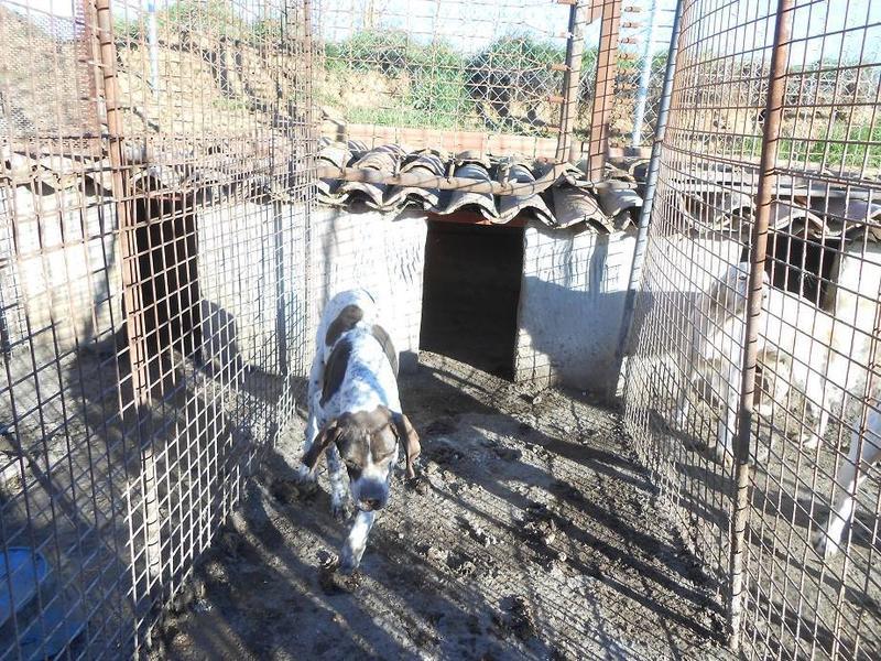 Dringender Spendenaufruf für 30 verwahrloste Hunde aus Sahagun/Spanien 16743484hg