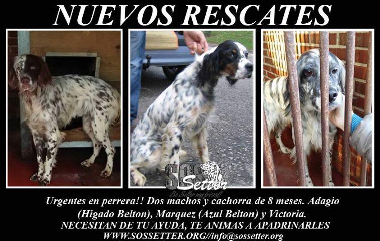 Dringender Spendenaufruf für 30 verwahrloste Hunde aus Sahagun/Spanien 16765676wu