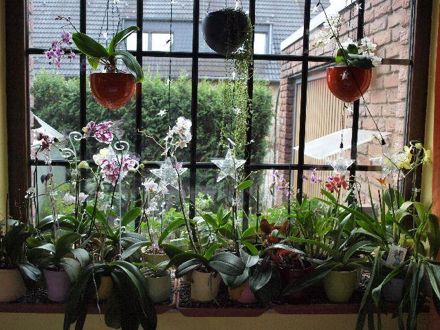 Orchidee und wie weiter page 31 mein sch ner garten forum - Dachfenster dekorieren ...
