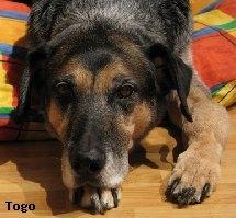 Roxys Forum Osteosarkomknochenkrebs Beim Hund