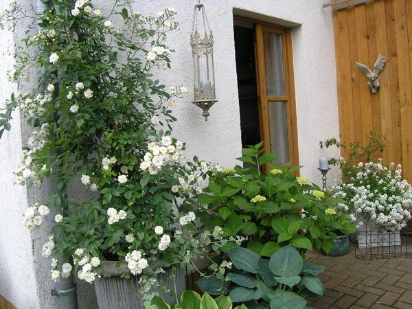 Pflanzen Nordseite pflanzen nordseite haus beautiful vorgarten anlegen nordseite