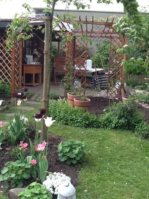 rosenbeet mit stauden einfassen ben tige hilfe mein sch ner garten forum. Black Bedroom Furniture Sets. Home Design Ideas