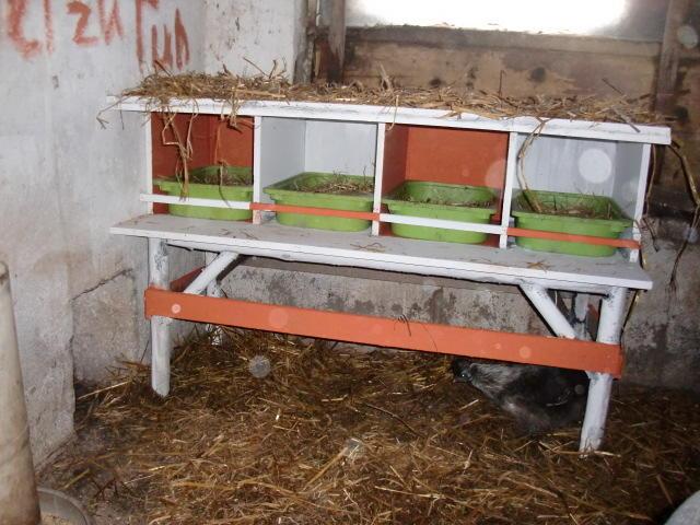legenester h hner selber bauen pflanzen f r nassen boden. Black Bedroom Furniture Sets. Home Design Ideas
