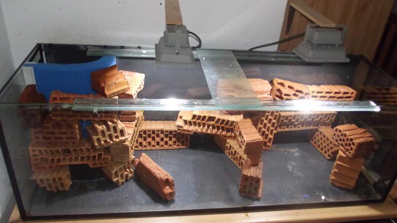 Dokumentation der entwicklung meines 375l tanganjika fels for Steine baumarkt