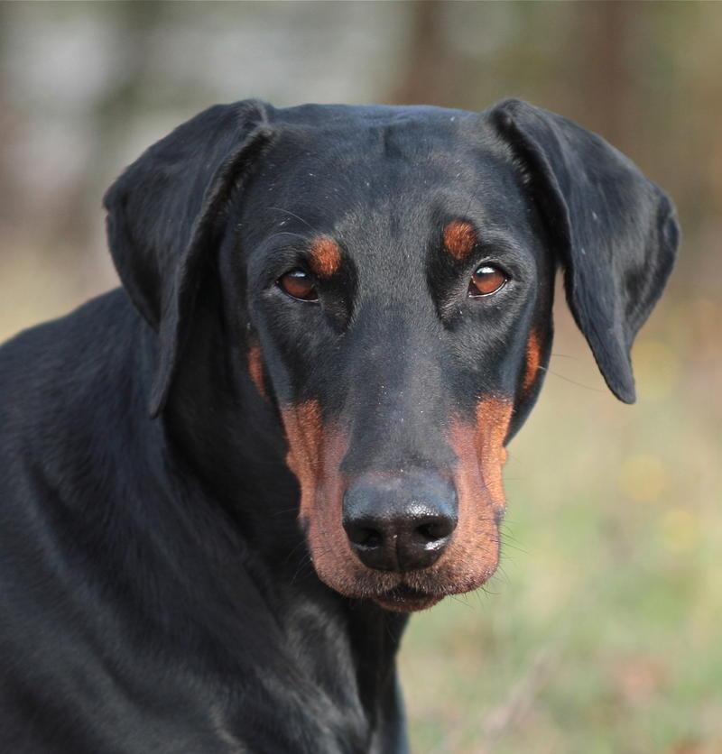 hunderassen wer hat bilder seite 9 hundelexikon ausbau und hilfe der hund. Black Bedroom Furniture Sets. Home Design Ideas