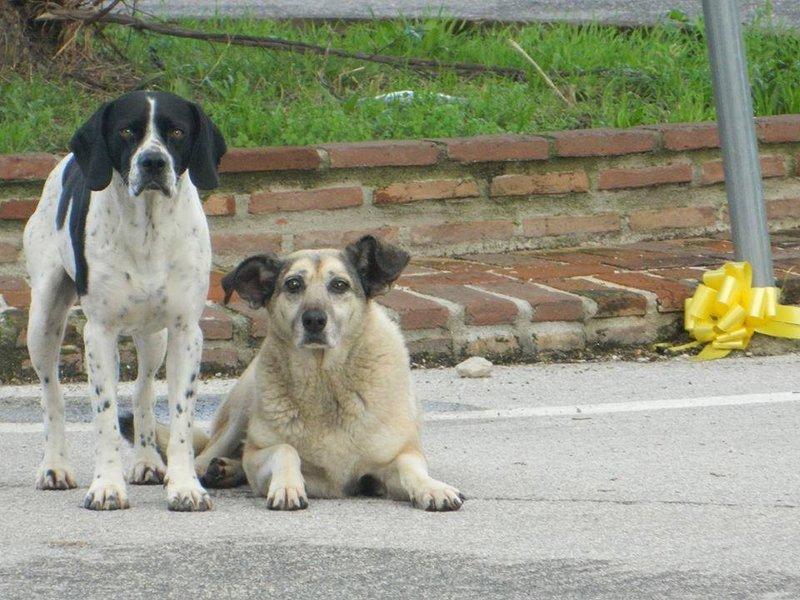 Rufus und Bianca 17426354hd