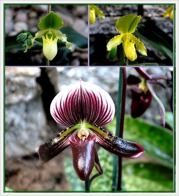 orchidee und wie weiter page 51 mein sch ner garten forum. Black Bedroom Furniture Sets. Home Design Ideas