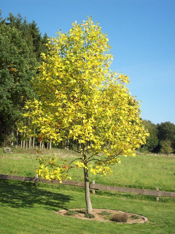 Gesucht Schoner Baum Als Sichschutz Mein Schoner Garten Forum
