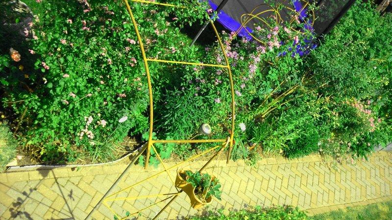 pflanzen blumen von aldi lidl seite 1 pflanzenfragen mein sch ner garten online. Black Bedroom Furniture Sets. Home Design Ideas