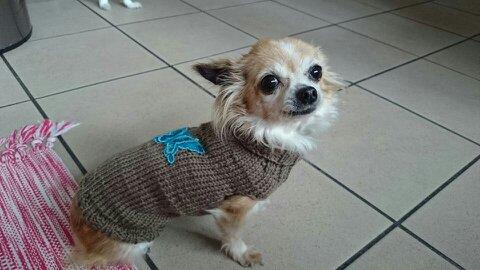 Meine Hundepullover Junghans Wolle Handarbeitsforum