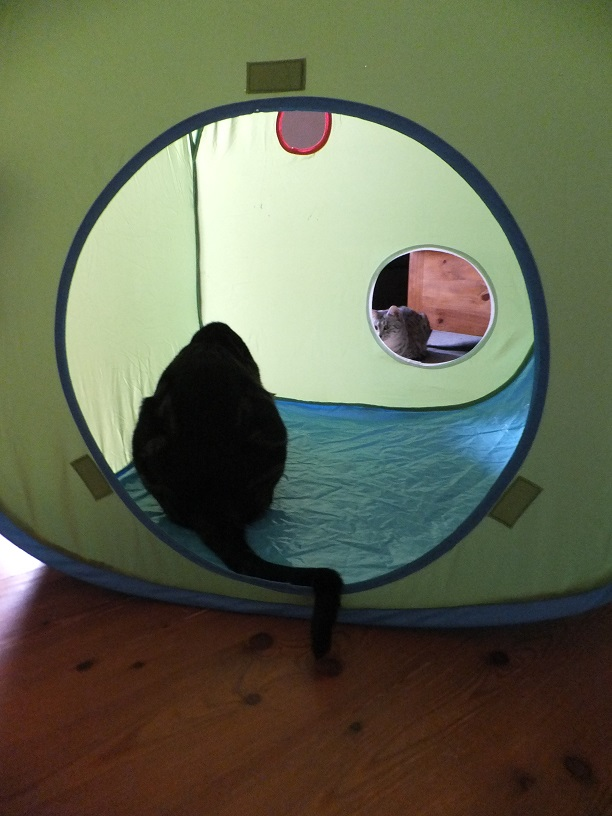 womit spielen eure katzen heute seite 148 katzen forum. Black Bedroom Furniture Sets. Home Design Ideas