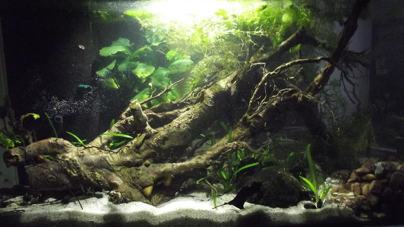 womit aquarium desinfizieren