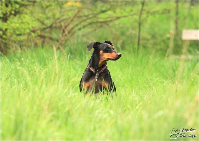 extremer zeckenbefall hund