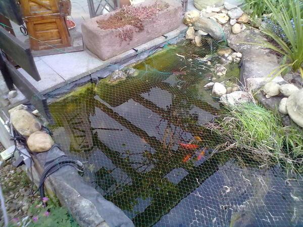 Gartenteich ist h sslich mein sch ner garten forum - Gartenteich abdeckung ...