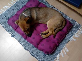 Luna (Five) hat ein neues Zuhause gefunden 18108800qo