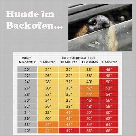 information hitze tabelle hund im auto