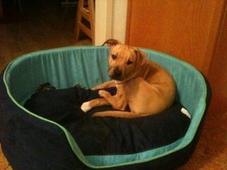 Zoey hat ein neues Zuhause gefunden 18165643cg