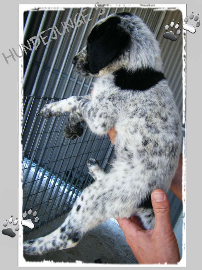 Wieviel ist ein kleines Hundeleben wert? – Namenspaten für 5 Hundejungs gefunden, weitere Spender gesucht... 18206323zc