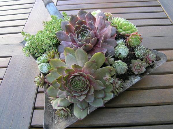 mein schoner garten vorgarten – siddhimind, Garten und erstellen
