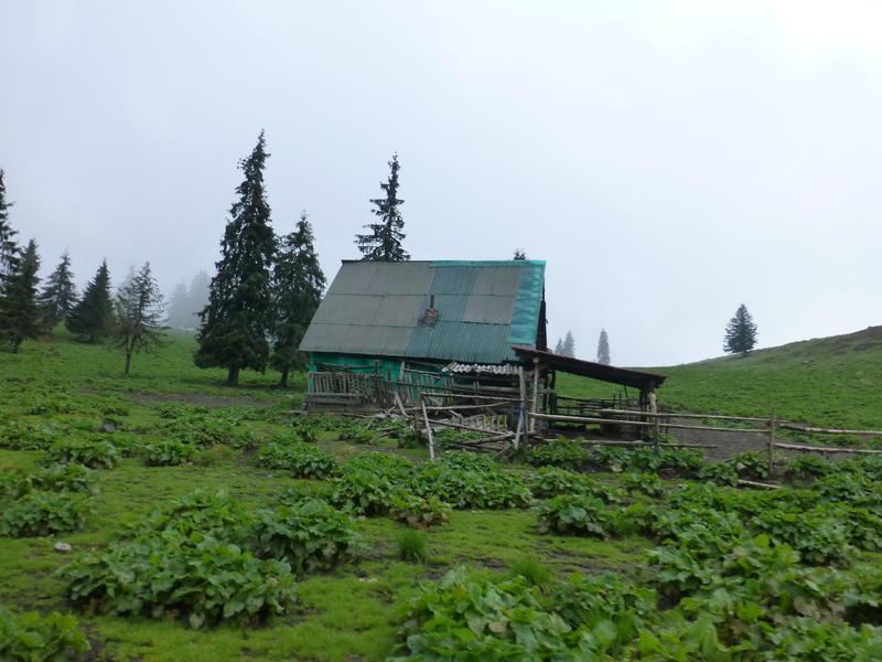 Karpat niva tour '14. Rumania 18323004ux