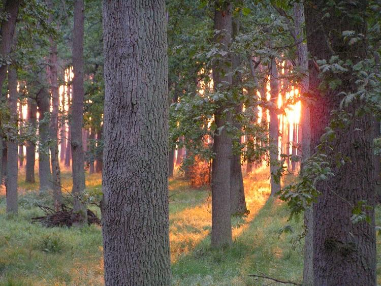 Sonnenuntergänge 18339618ac