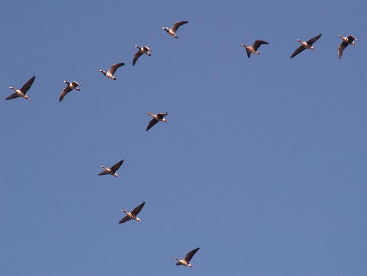 Vögel 18339684ik