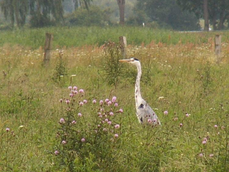 Vögel 18339689iq