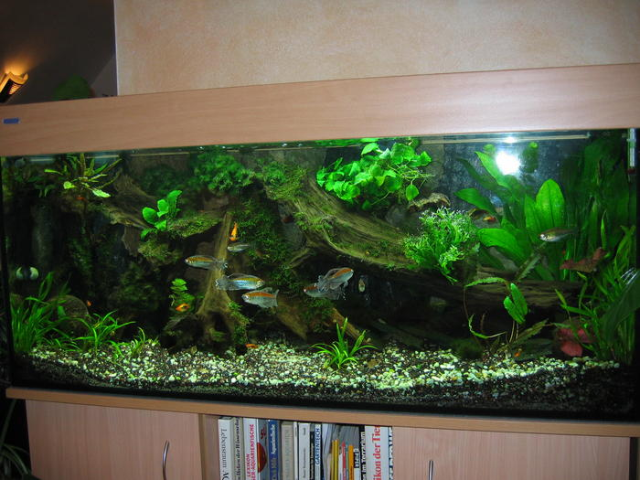 pin aquarium einrichten deko ideen nat rliche unterwasserlandschaft on pinterest. Black Bedroom Furniture Sets. Home Design Ideas