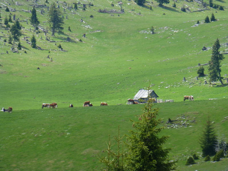 Karpat niva tour '14. Rumania 18357063fh