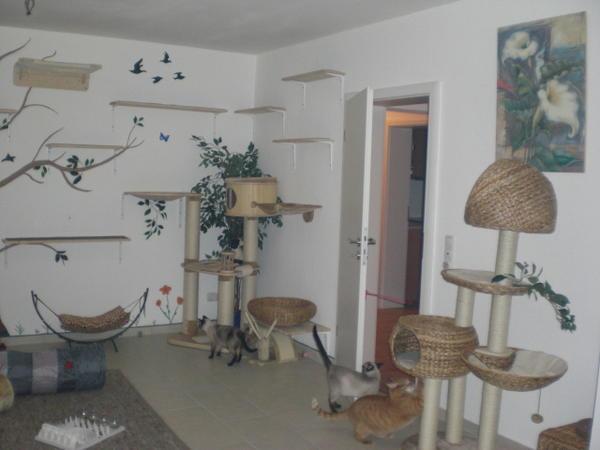 catwalk katzen forum. Black Bedroom Furniture Sets. Home Design Ideas