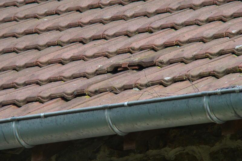 Vogelnesten onder dakpannen