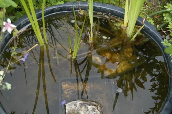 Anlagetipps f r miniteiche und becken seite 47 for Algen im teich entfernen