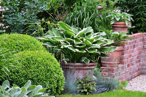 Eure gartenbilder beete und gestaltungsideen sommer 2014 for Gartengestaltung john