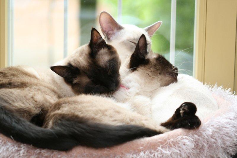 katzen forum kitten geht nicht von alleine auf das katzenklo. Black Bedroom Furniture Sets. Home Design Ideas