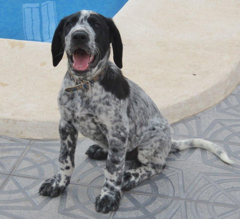 Wieviel ist ein kleines Hundeleben wert? – Namenspaten für 5 Hundejungs gefunden, weitere Spender gesucht... 18650241hj