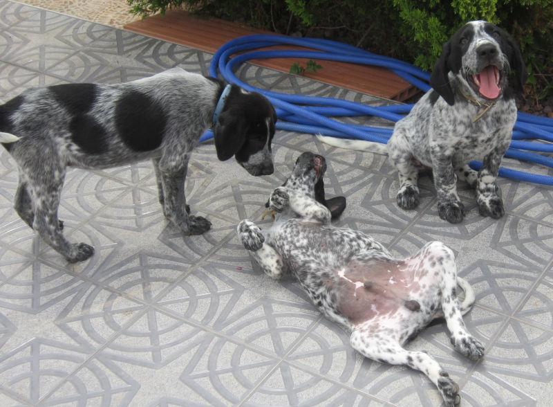 Wieviel ist ein kleines Hundeleben wert? – Namenspaten für 5 Hundejungs gefunden, weitere Spender gesucht... 18655203ib